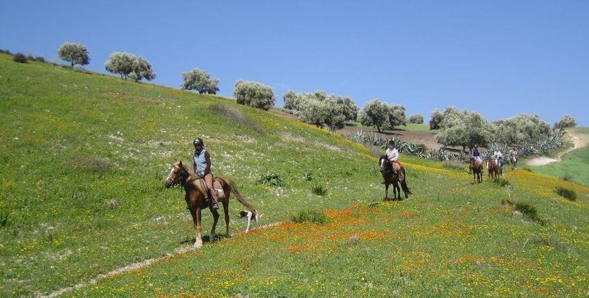 Wanderritt Königsstädte Marokko
