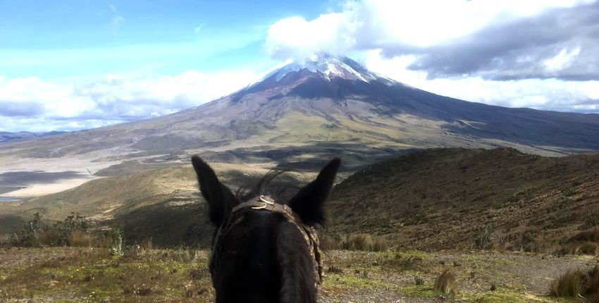 Bilck durch Pferdeohren auf den Vulkan Cotopaxi