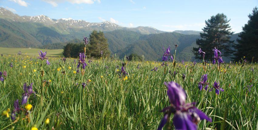 Georgien - Blumenwiese in Tushetien