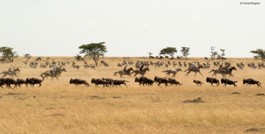 Kenia - Maasai Mara