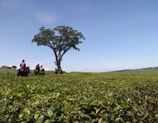 Uganda Wanderritt am Nil