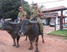 Amazonas Expedition Marajó