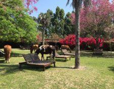 Estancia Corrientes - Garten