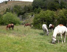 XAndes - Freizeit für die Pferde