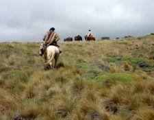 XAndes - weite Pampa