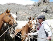 XAndes - Vorbereitung der Pferde