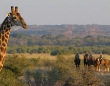 Tuli Block - Reiter und Giraffe