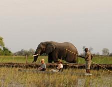 Okavango Delta - Mokoro-Ausflug