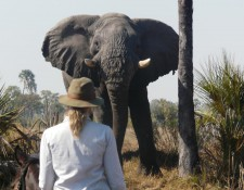 Okavango Delta - Auge in Auge mit Elefanten
