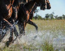 Okavango Delta - Wasser reiten