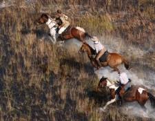 Okavango Delta - erfrischender Galopp über Flutebene