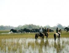 Okavango Delta - beobachten von Elefanten