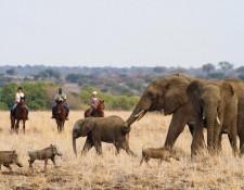 Tuli Block - Elefantenherde mit Jungtieren