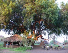 Tuli Block - Bar im Camp Two Mashatus