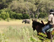 Reiter und Elefant im Okavango