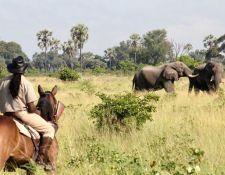 Ellies und Reiter im Delta