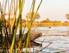 Mokoro und Flusspferd in einer Lagune