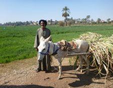 Bauer mit seinem Esel