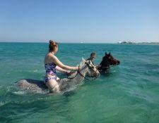 Schwimmen mit Pferden im Roten Meer