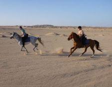 Schnell unterwegs in der Wüste