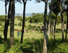 Kenia Reitsafari Maasai Mara Conservancies