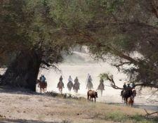 Damara Elephant Ride