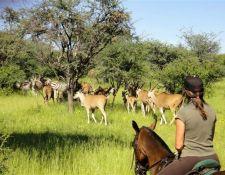 Begegnung mit Elen-Antilopen